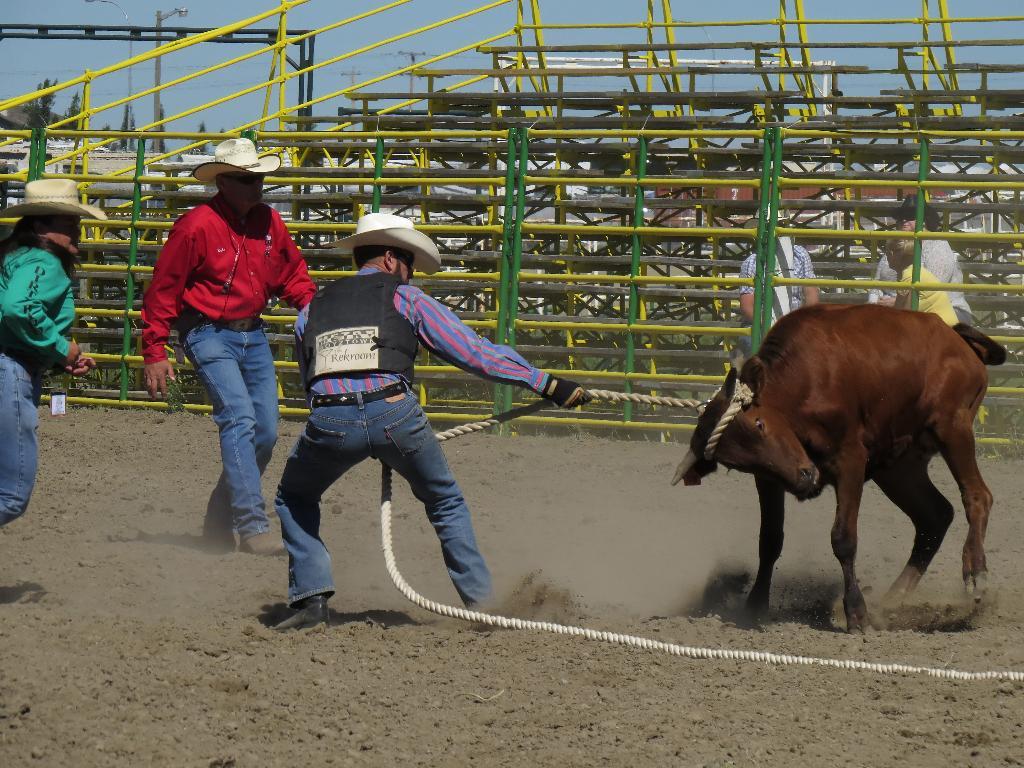 from Salvador calgary gay rodeo